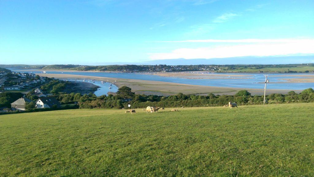 Sheep grazing with cornish coastline in background
