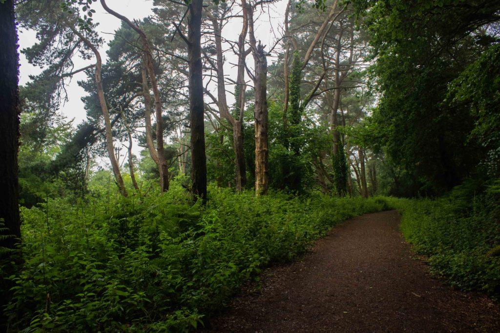 Woodland path at Langdon Hills