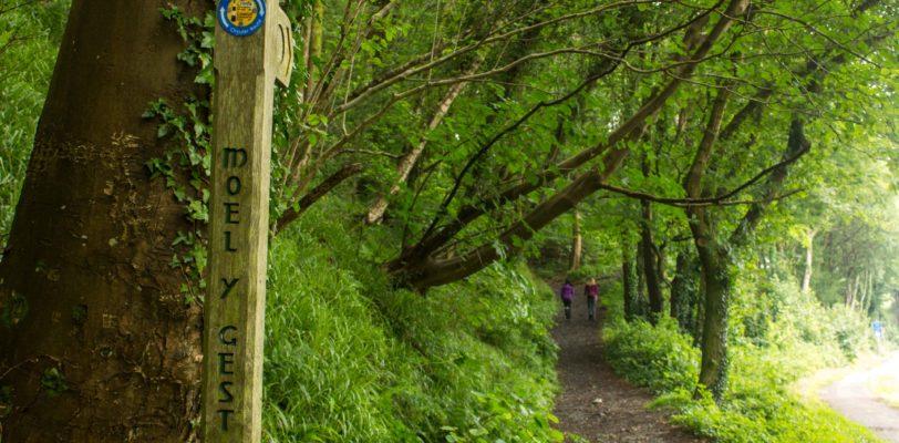 Moel-y-Gest Signpost