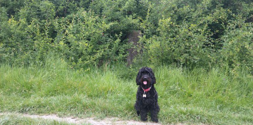 Black dog in front of Cockroad trig pillar