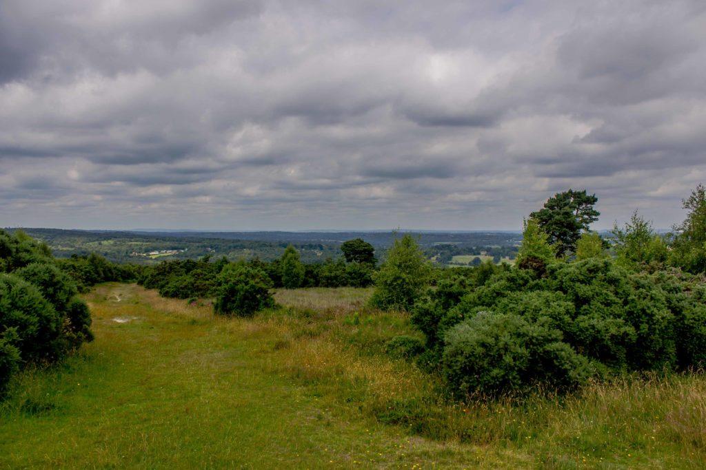 View across Ashdown Forest