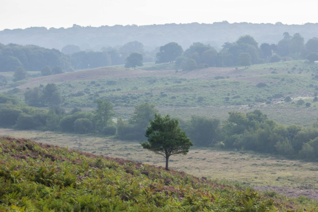 Ibsley Common New Forest