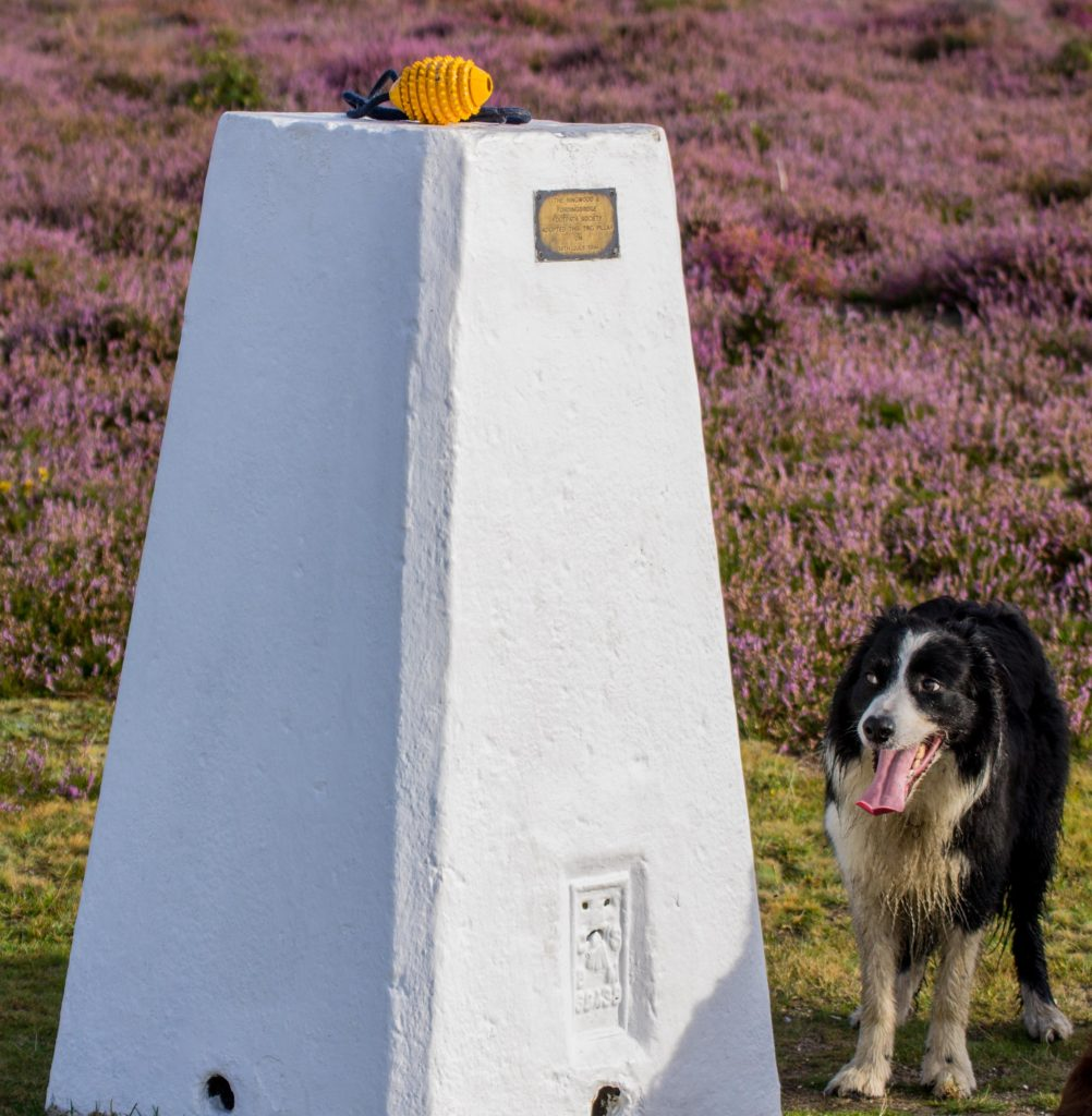 Bryn at the Ibsley Common trig pillar